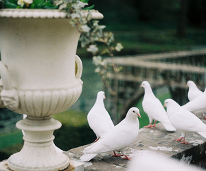 bird, dove, and nature image