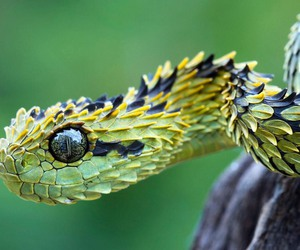 snake, animal, and nature image