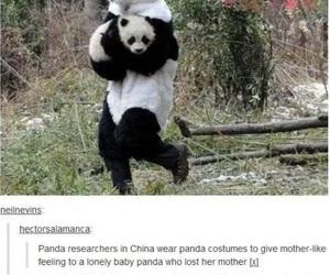 funny, panda, and lol image