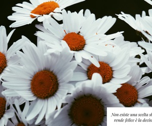 daisies, flower, and tumblr image