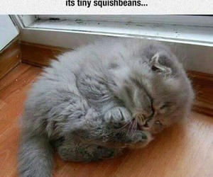 cute, adorable, and cat image