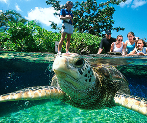 turtle and animal image