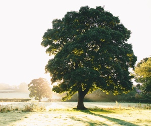 nature, tree, and photography image