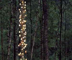 light, forest, and nature image