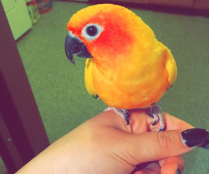 beautiful, black nails, and parrot image