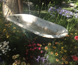 flowers, nature, and bath image