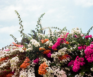 flowers and colours image