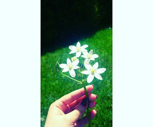 flower, green, and hand image