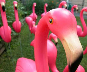 pink, flamingo, and kitsch image