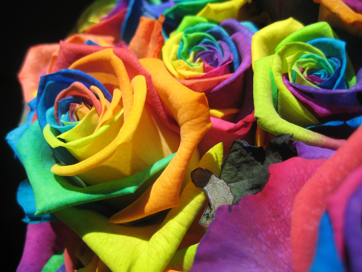 flowers, rose, and colorful image