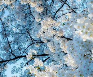 flowers, white, and blue image
