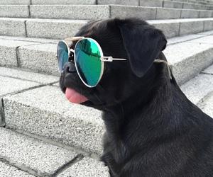 dog, black, and pug image