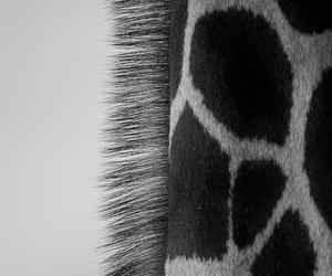 giraffe, animal, and black image
