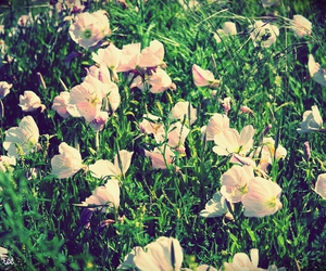 flowers, lomo, and lomography image