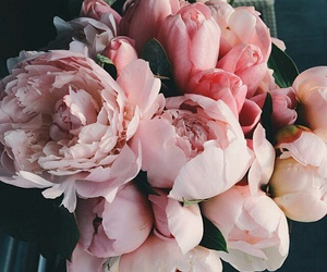amazing, flowers, and gift image