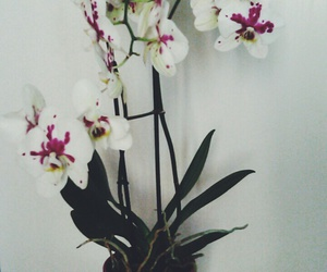Cinnamon, flowers, and orchids image