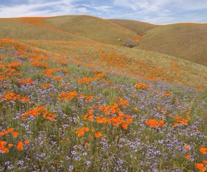 nature, landscape, and flowers image