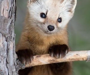 animal, cute, and wild image