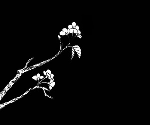 black and white, flowers, and monochrome image