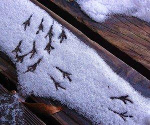 birds, snow, and tracks image