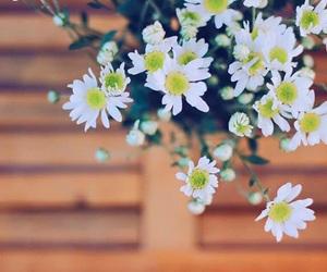 blue, flower, and Vietnam image