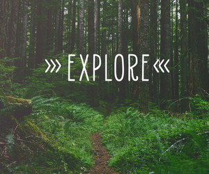 explore, tree, and nature image