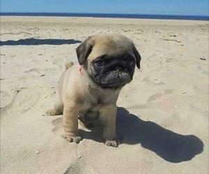 animal, beach, and summer image