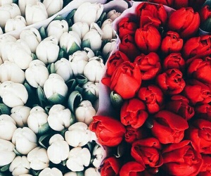 white, flowers, and red image