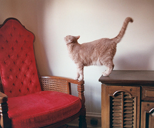 cat, interior, and photography image