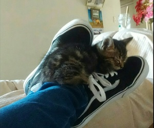 amazing, cats, and Gatos image