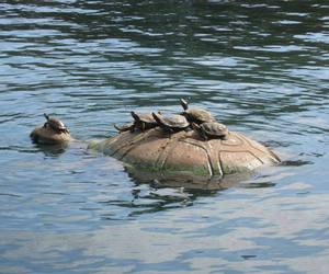 animal and turtle image