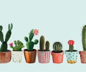 cactus and succulent image