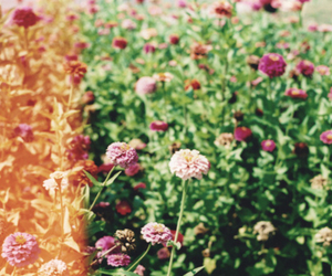 flowers, vintage, and spring image