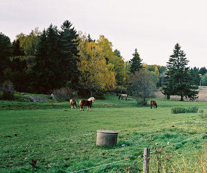 autumn, horses, and rural image