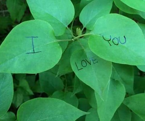 love, nature, and plants image