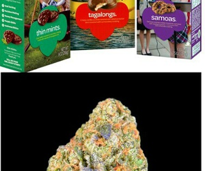 girl scout cookies, quote, and stoner image