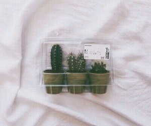grunge, plants, and cactus image