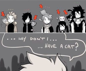 cats, fairy tail, and dragon slayers image