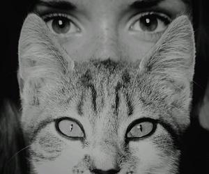 cat and blackandwhite image