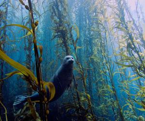 seal, animal, and sea image