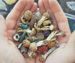 crystals, shrooms, and drugs image