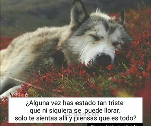 spanish quotes and love image