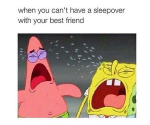 funny, spongebob, and best friends image