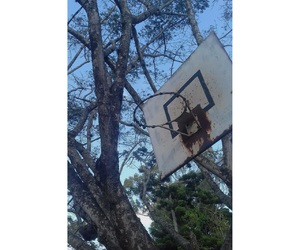 nature, old, and cancha image