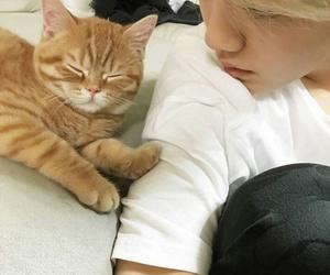 cat, luhan, and xi luhan image