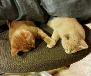 cats, holding hands, and naps image