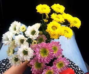 beauty, flowers, and mood image