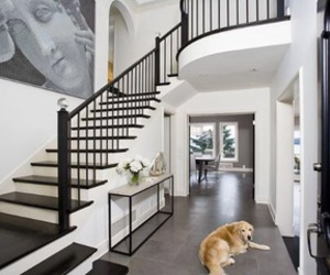 dog, home, and interior image