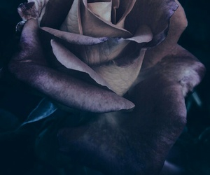 rose, flowers, and grunge image