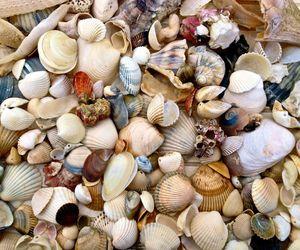 beach shells image